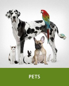 Safety: Pets