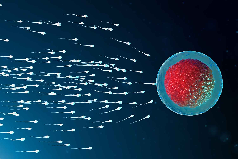 HIV Fertility and Pregnancy